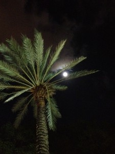 Palm Tree and Moon on Lincoln Road in South Beach