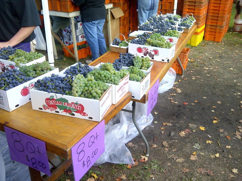 Naples Grape Festival