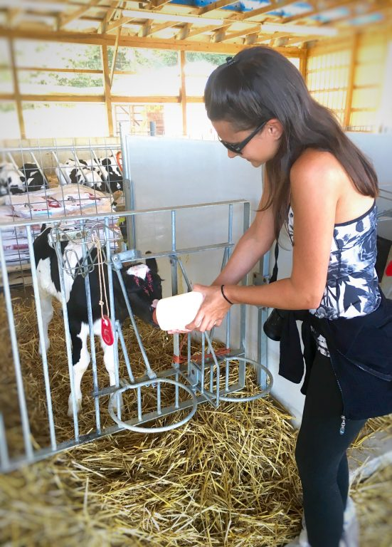 Feeding a calf at Clardale Farms in Cleveland, Ohio.