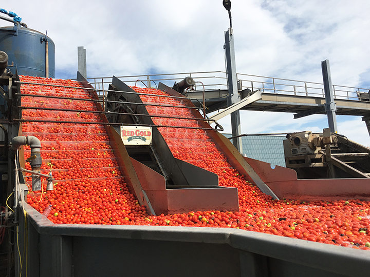 Tuttorosso Tomato Canning Facility in Indiana