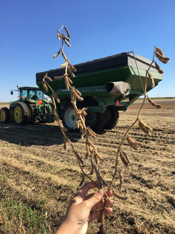 Soy Bean harvesting on Kenney Farm in Iowa.