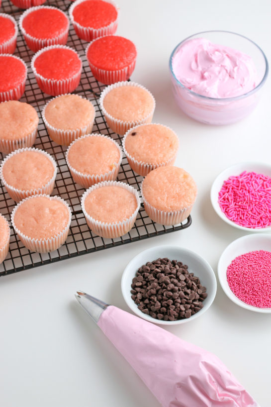 About to decorate the baked cupcakes with the buttercream frosting using a piping bag